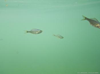 110909-06-小魚-1644.jpg