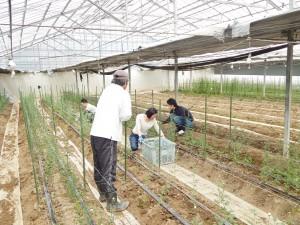 農業支援2