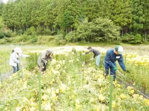 農業支援 (2)